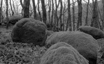 Rocas del bosque de robles.